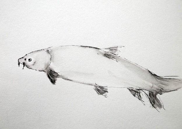 Fische (Rote Liste)